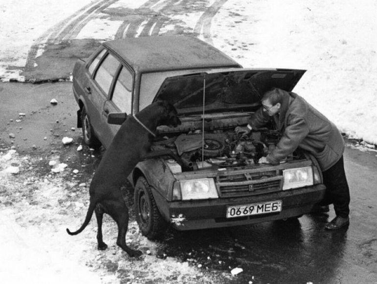 пес чинит авто