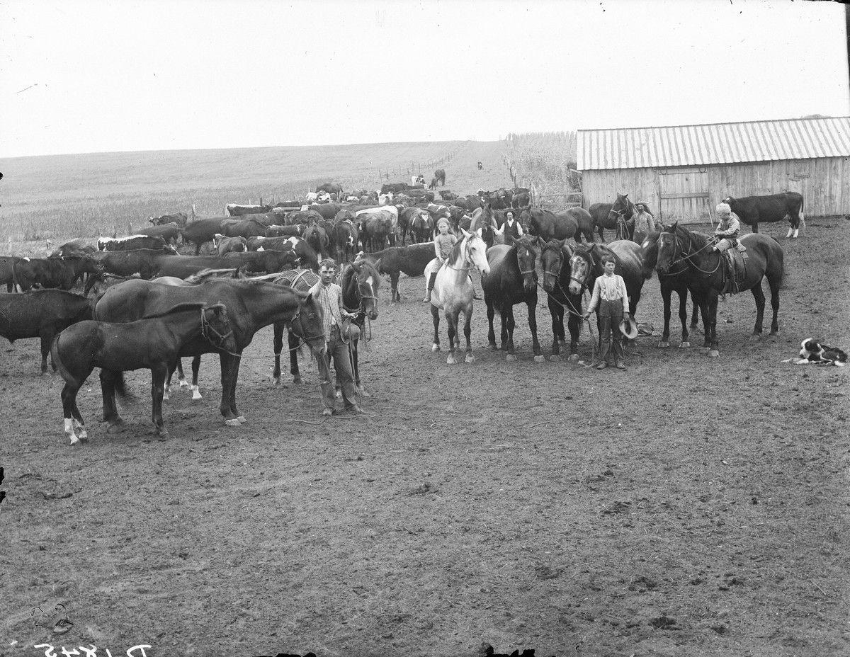 ранчо, лошади