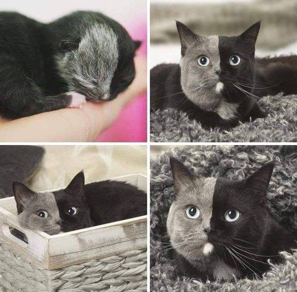 Кот-мечта!