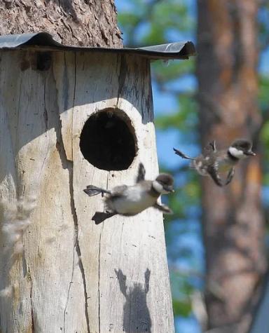 птенцы, полет