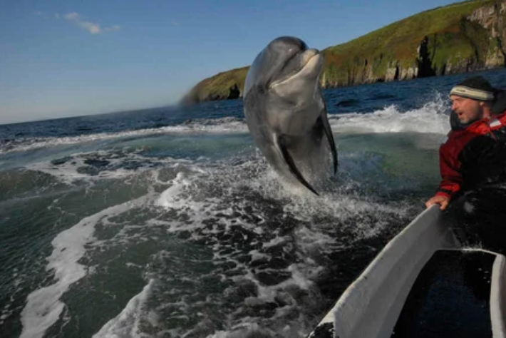 дельфин, человек, море