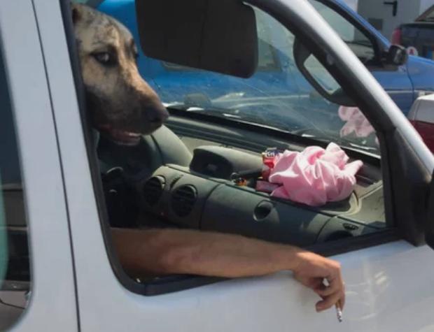 пес, автомобиль, окно