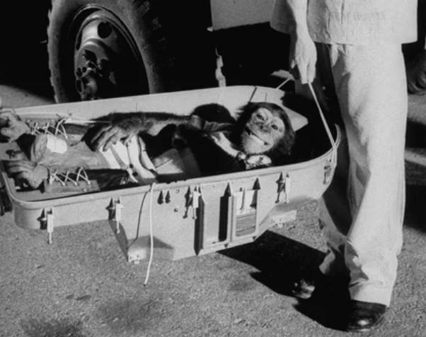 шимпанзе, астронавт