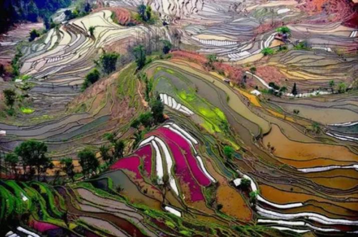 рис, терраса, пейзаж