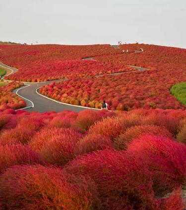 Приморский парк Хитачи, Япония / nipomen2 | sename777