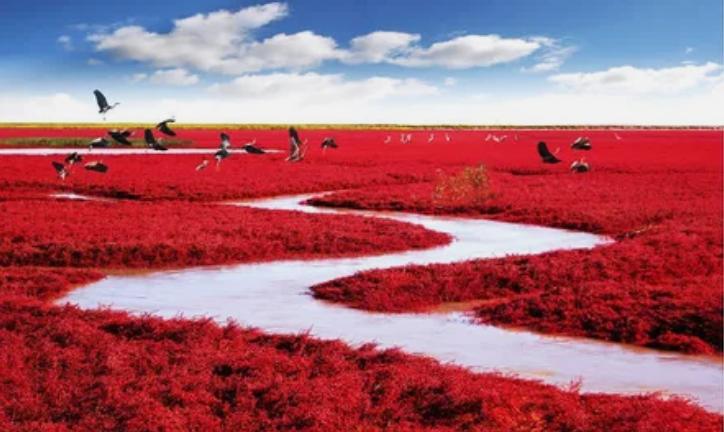 Красный пляж, Паньцзинь, Китай / MJiA
