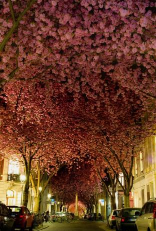 Улица в Бонне, Германия / Adas Meliauskas