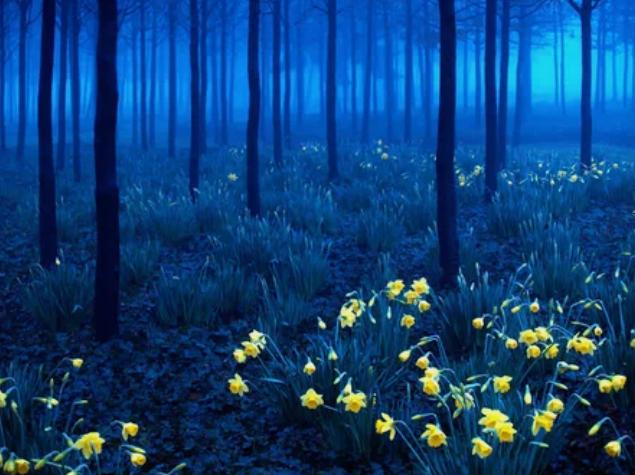 Черный лес, Германия / andy linden