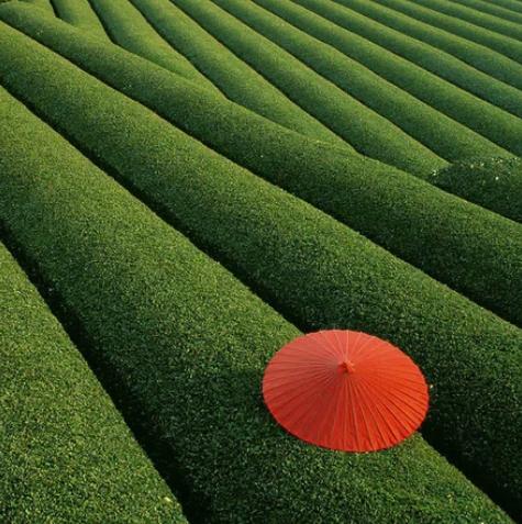 Поля чая, Китай / unknown