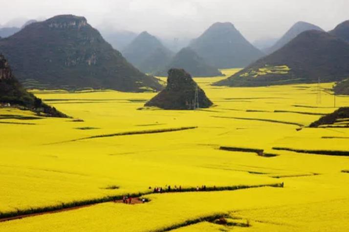 Цветочные поля рапса, Китай / +Lanzi