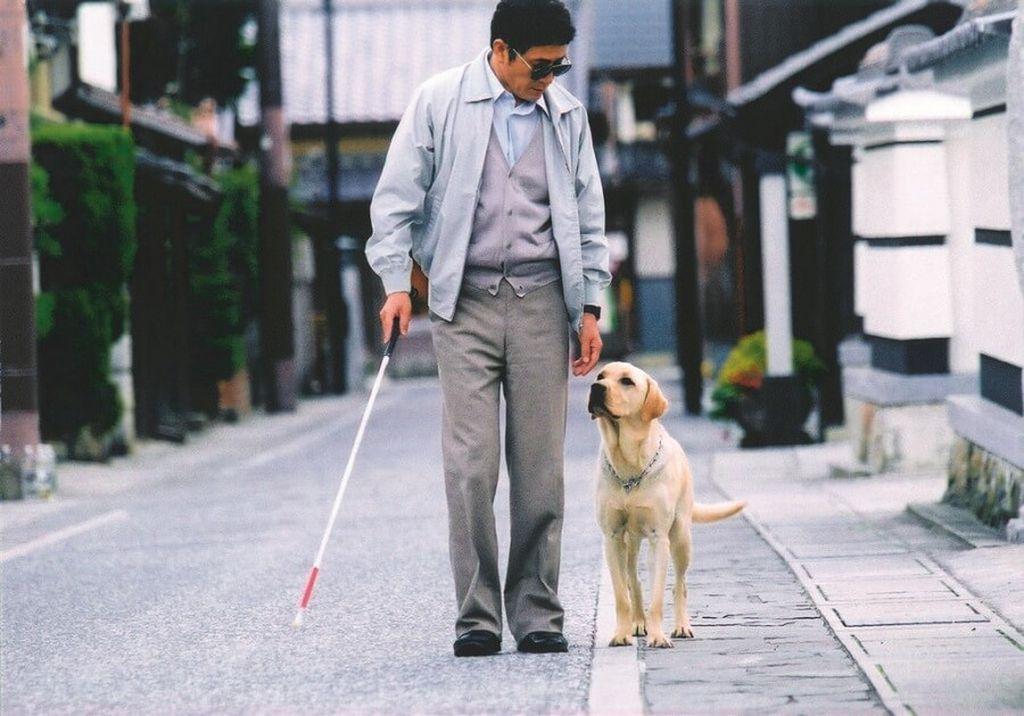 слепота, человек