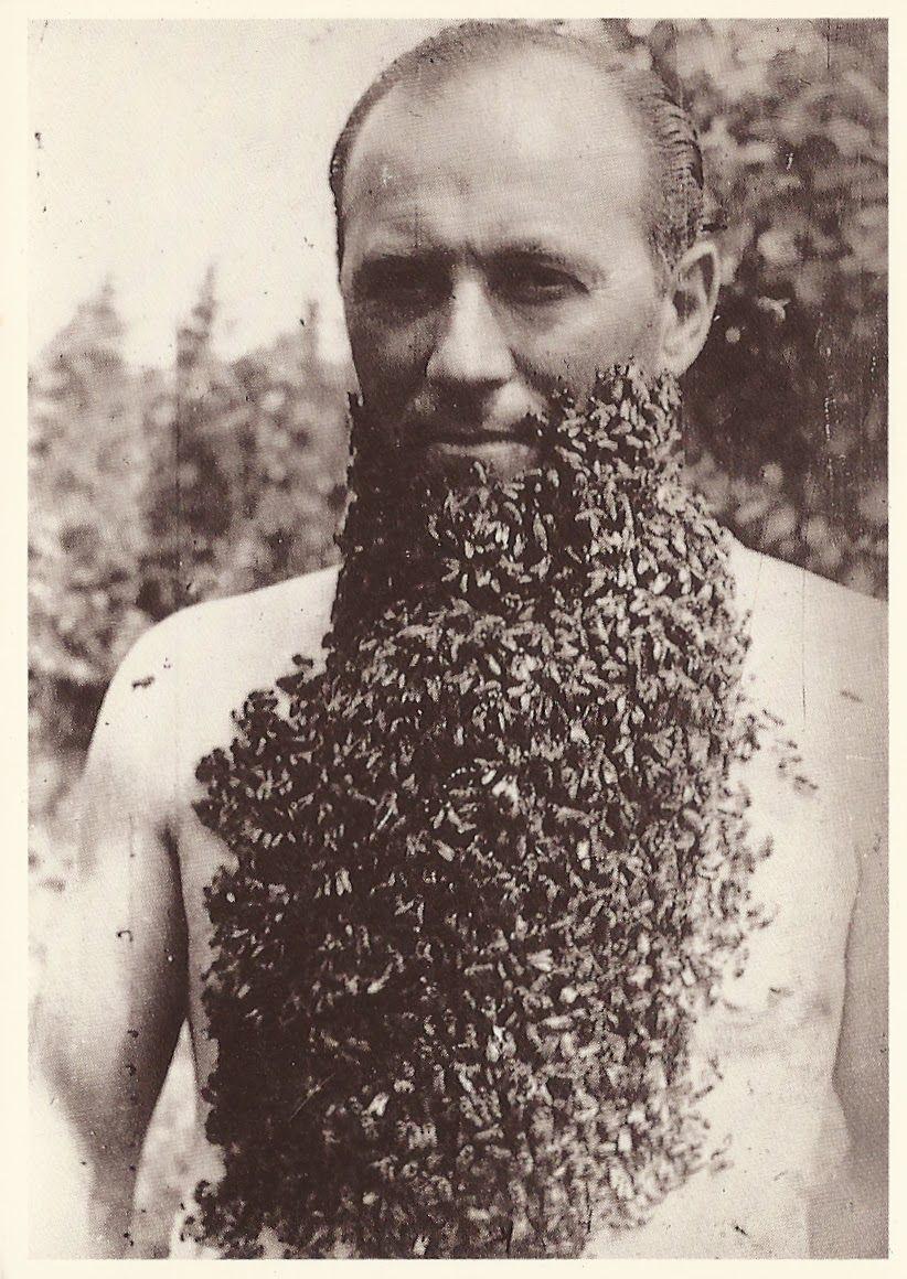 борода,мужчина, пчелы