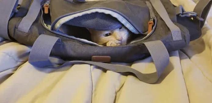Возможно, Оливер хочет в школу, раз забрался в рюкзак?