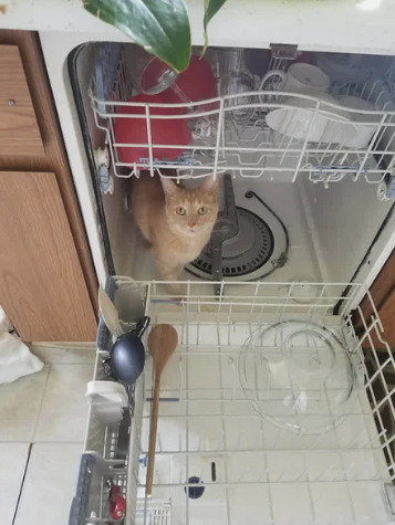 А в посудомоечной машине - свежевымытым