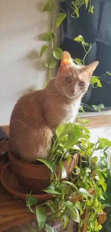 Горшок с растением - любимое место каждого кота