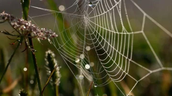 паутина, паук