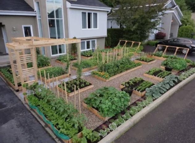 огород, сад, благоустройство