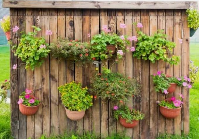 сад, клумба, цветы