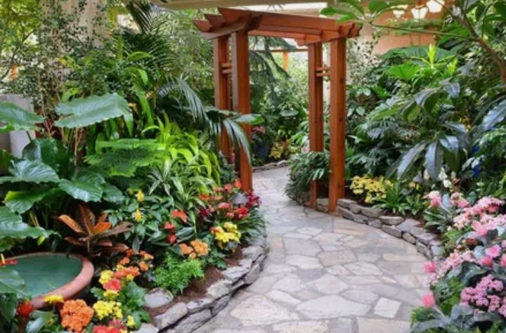 растения, дизайн,сад