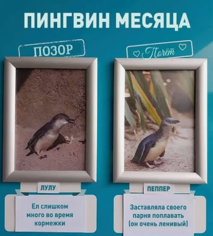 пингвины, таблички