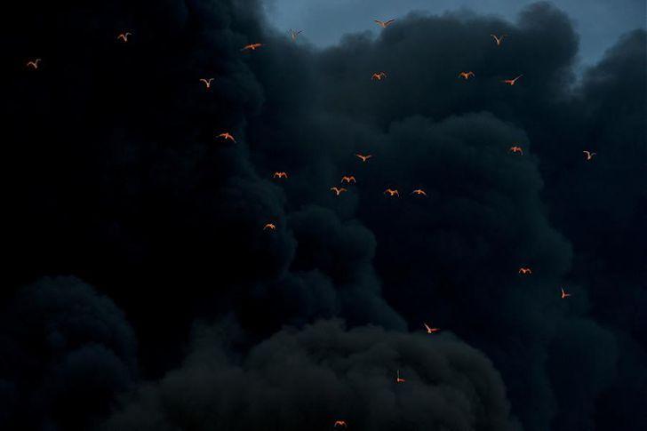 птицы, дым, огонь