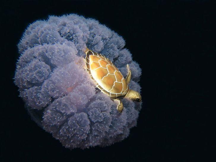 медуза, черепаха, океан