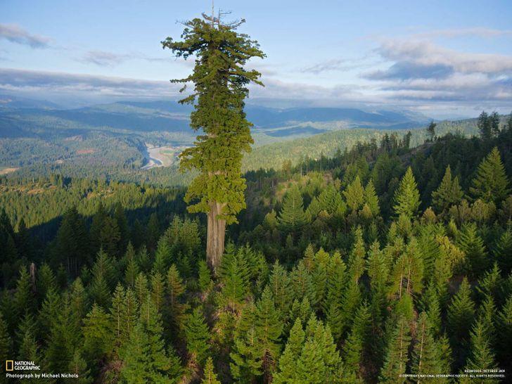 дерево, лес