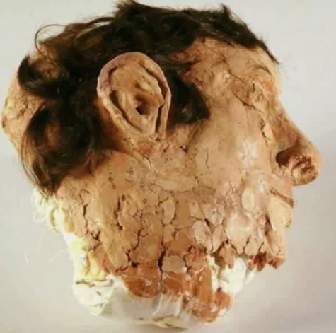 муляж, голова
