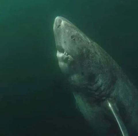 акула, океан