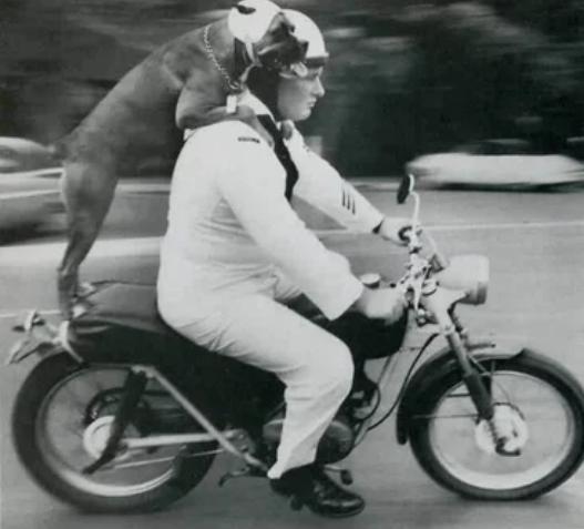 Кэти соблюдает закон о наличии шлема на голове во время езды на мотоцикле с Франклином Дрисколлом на Гавайях