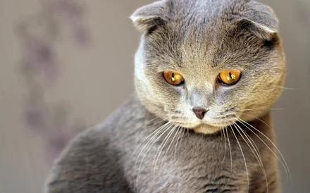 40 коротких, но интересных фактов о кошках