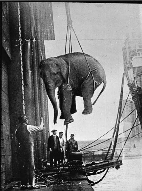 Перевозка слона / Фото: ©fototelegraf.ru