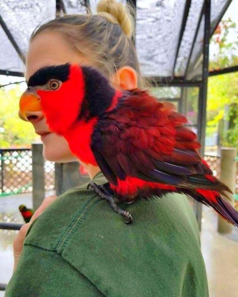женщина, попугай