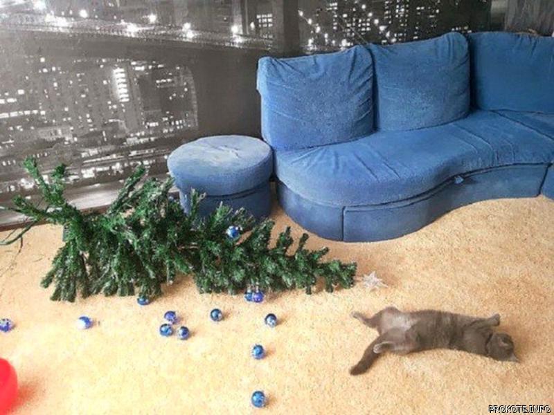 кот, елка