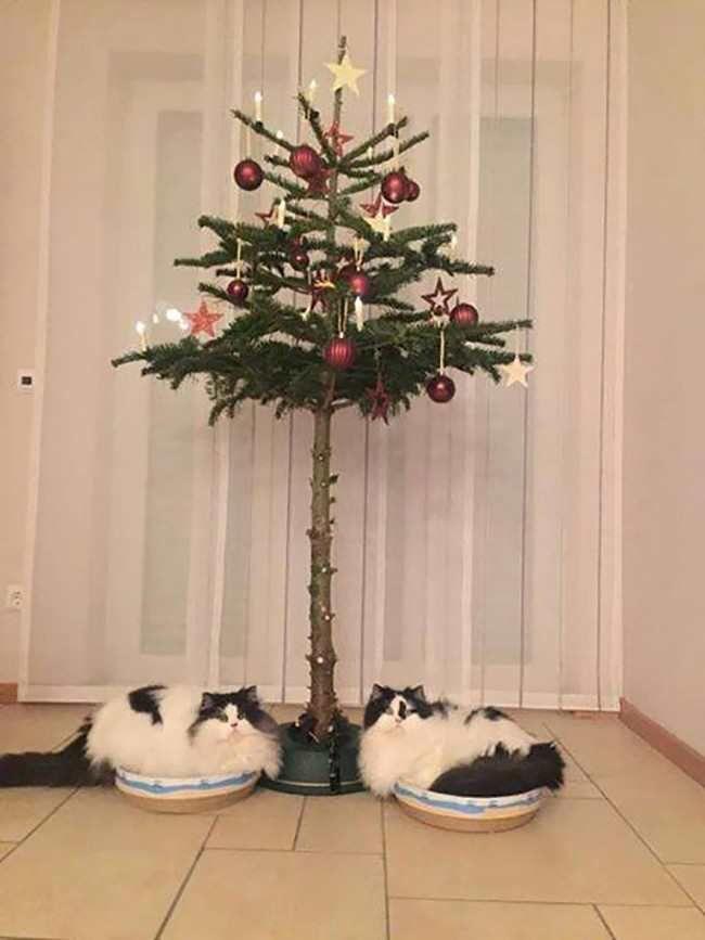 кошка, елка