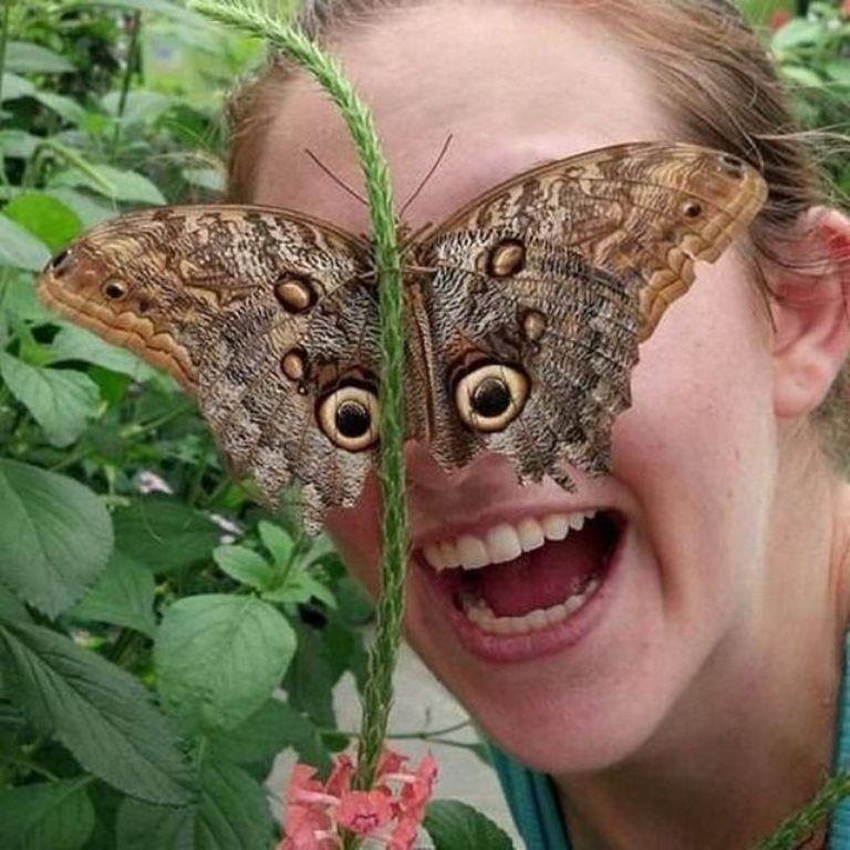 бабочка, женщина